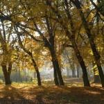 Park w Odonowie