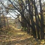 park_skraj_d